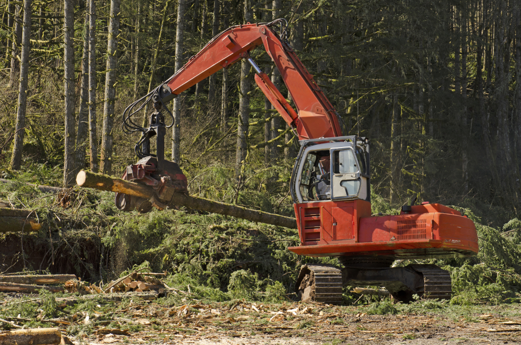 A logging harversting or processing head is being used to delimb and cut to length logs before stacking